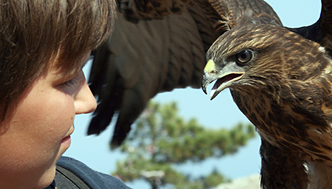 3-Hour Falconry Experience - 6 UK Venues
