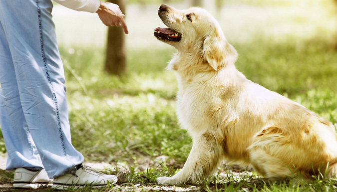 Mastering Dog Training and Care Online Course