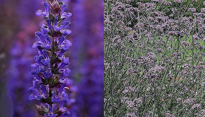 Lucky Dip 'Perfect Perennial' Collection - 72 or 144 Plants