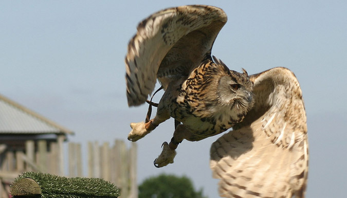 2-Hour Birds of Prey Experience For One or Two - Dorset