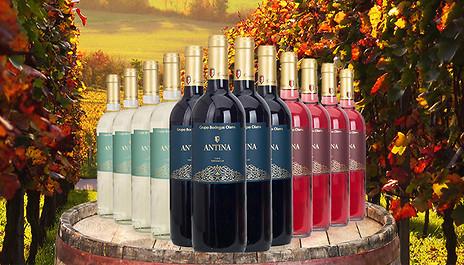 GoGroopie 12-Bottle Tierra de Castilla Wine Collection